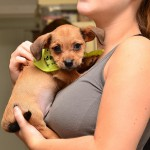 Pet Adoption 101: Tips on adopting as summertime adoption events pick up