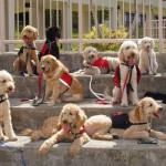 Fake service dogs infringe on rights of abled and disabled alike