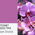 Pantone picks Radiant Orchid as the color of 2014